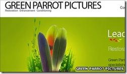 _51695593_greenparrot